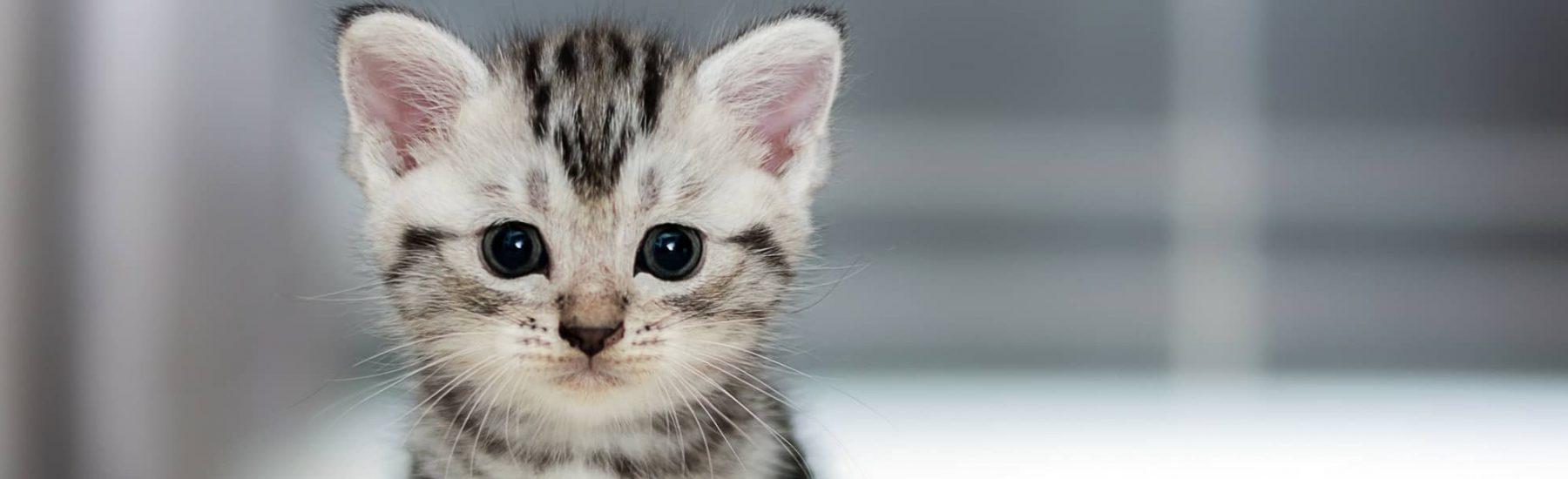 catservice-kitty