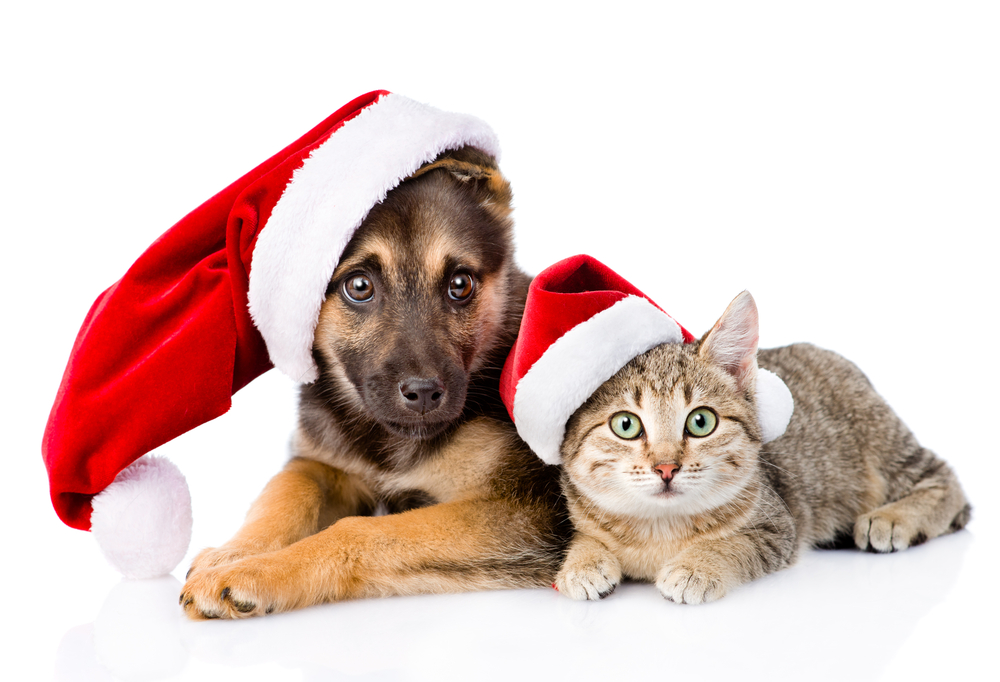 Puppy and cat wearing Santa hats